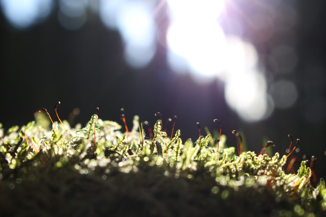 Image of sunlight on weeds