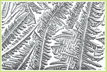 A close up of the ferning pattern looks like little black and white ferns.