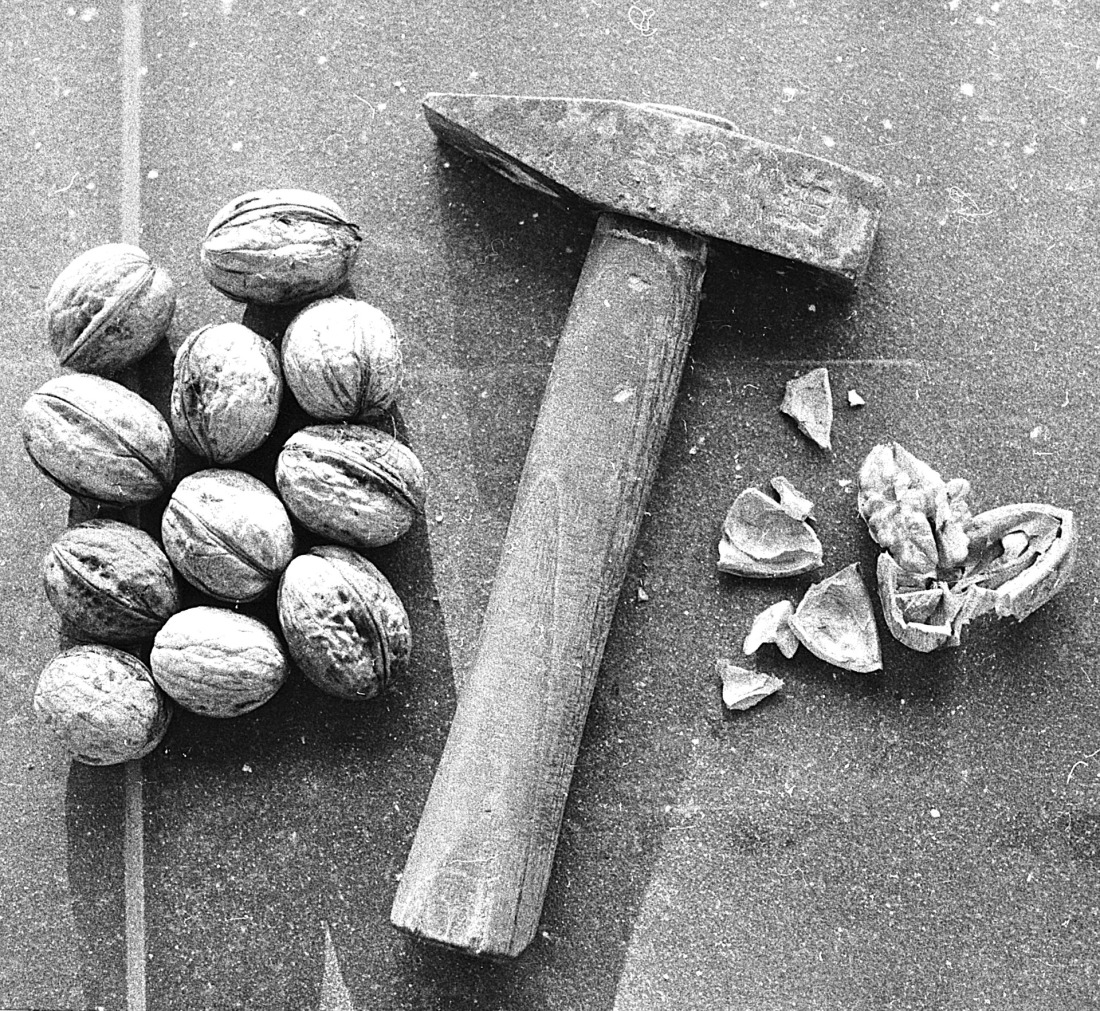 walnuts, a hammer, and a smashed walnut.